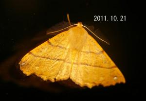 カバエダシャク2011.10.21