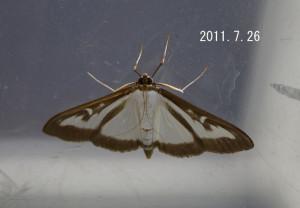 ツゲノメイガ2011.7.26