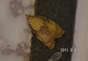 ウンモンキハマキ2011.8.1-2