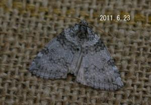 ギンモントガリバ2011.6.23