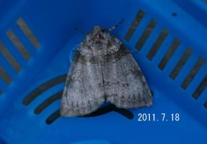 ギンモントガリバ2011.7.18
