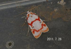 アカスジシロコケガ2011.7.26