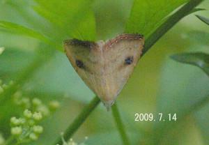 テンクロアツバ2009.7.14-3