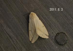 スジモンヒトリ2011.8.3