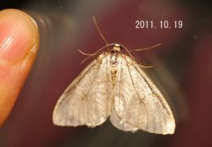 アキナミシャク2011.10.19-2